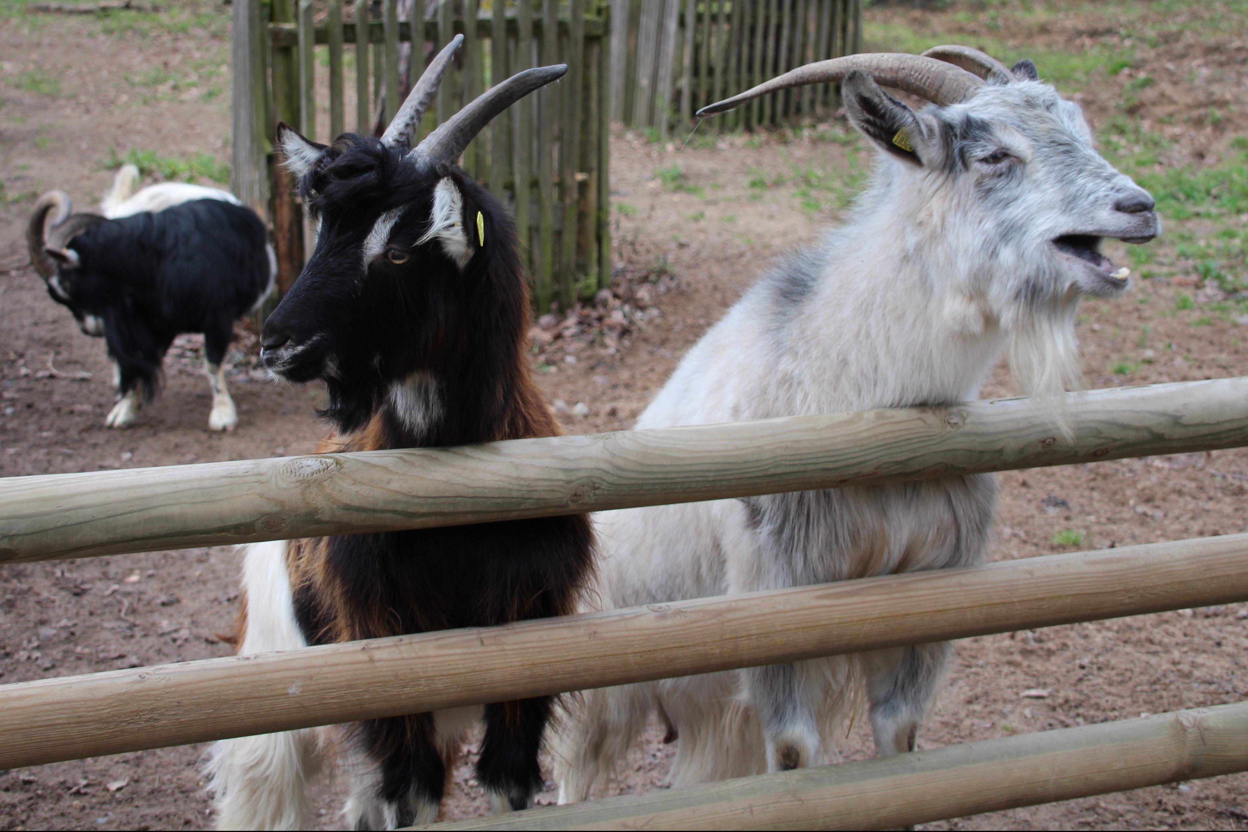 Im Tierpark Sommerhausen werden die Bedürfnisse der Tiere im Winter besonders berücksichtigt. Foto: Claudia Schuhmann
