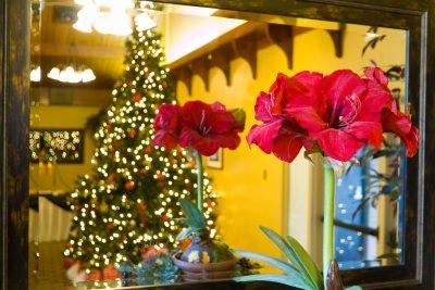 Viele Weihnachtsblüher sind sehr giftig